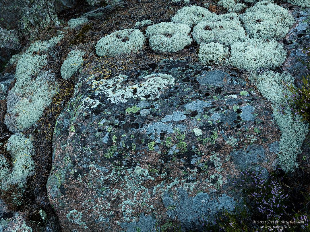 Lavar på klippa, Vårdkullberget, Höga Kusten.