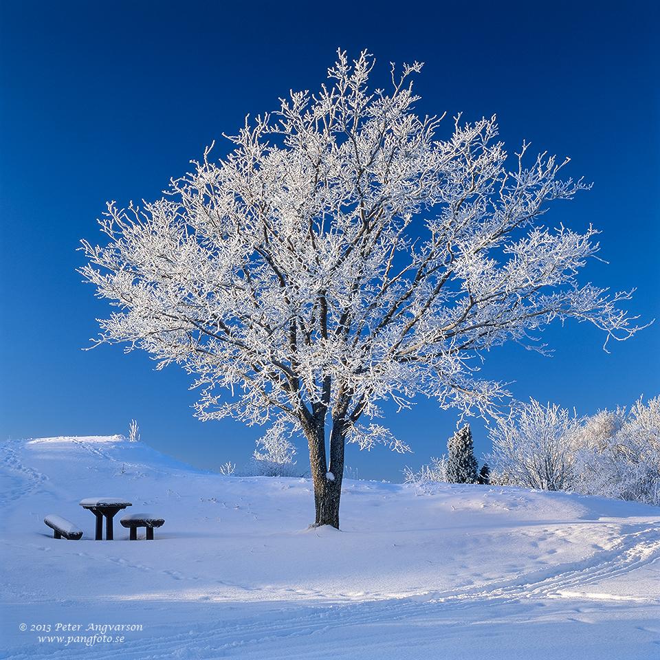 trad004_frost_pangfoto_se