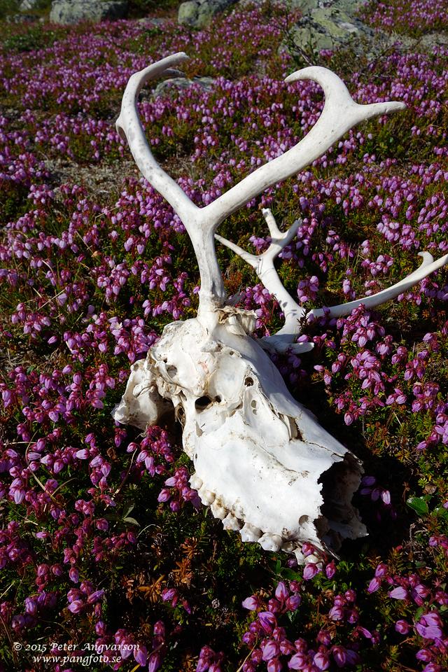 Naturens egen kyrkogård