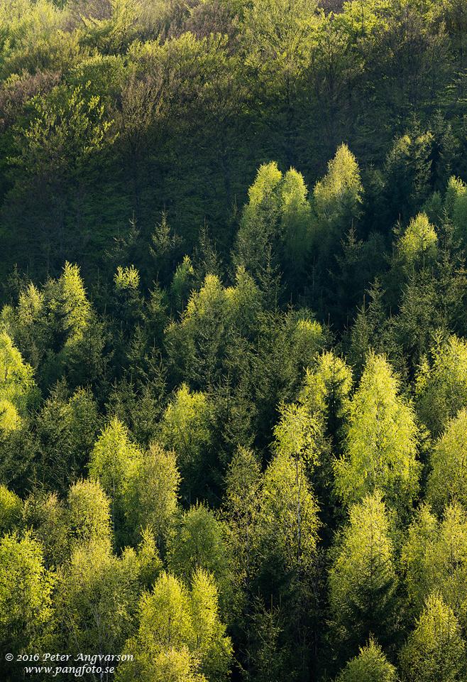 skog_var_pangfoto_se_Q2A7609