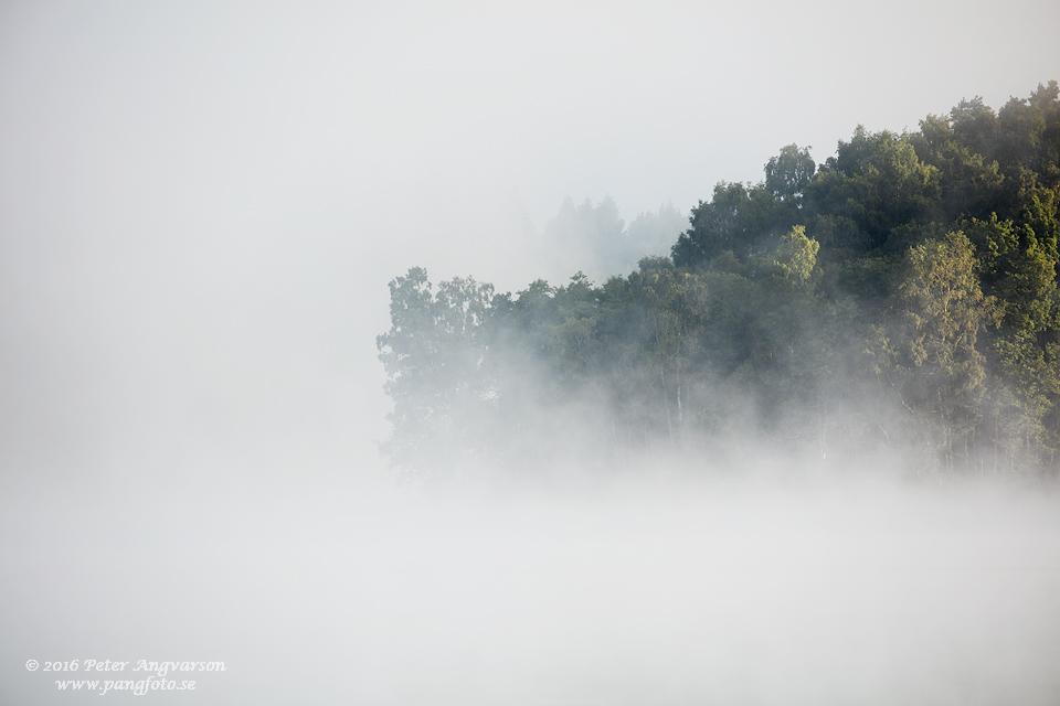 skogsudde_dimma_pangfoto_se_Q2A0094