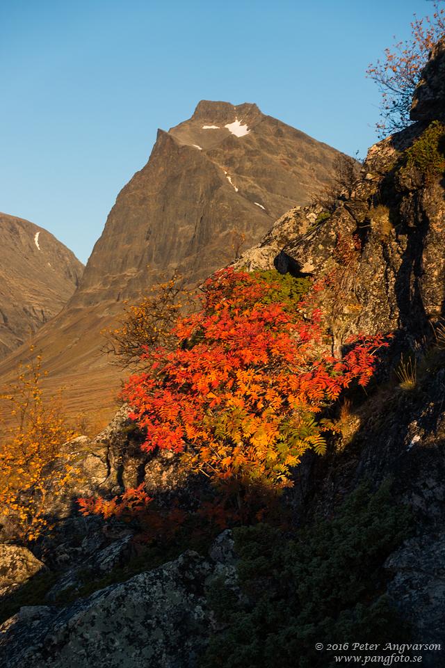 Tolpagorni Duolbagorni kungsleden nordkalottenleden fjällvandring pangfoto Peter Angvarson