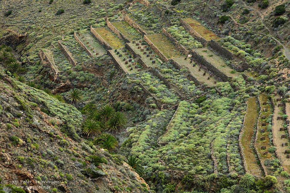 La Gomera, Barranco de los Zarzale
