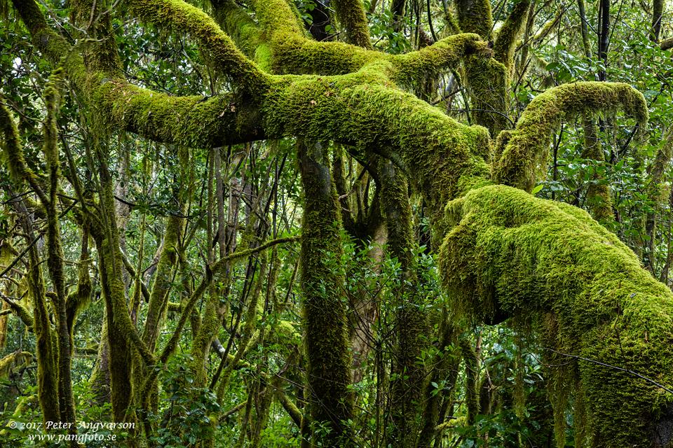 La Gomera, Parque Nacional de Garajonay